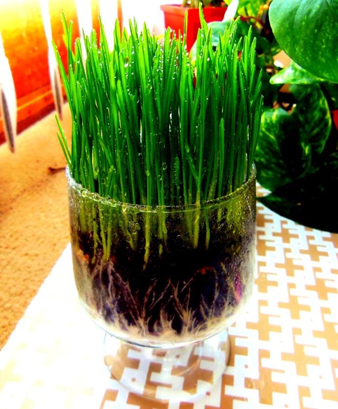 Grow Spring Grass